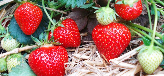 Орошение ягодных культур