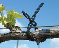 Цепочка для винограда