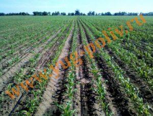 Орошение кукурузы