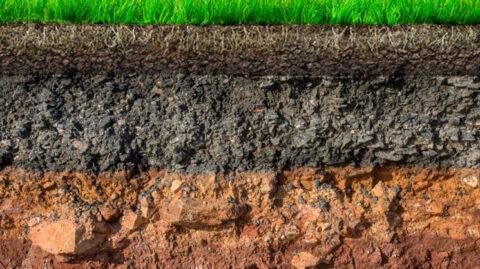Анализ почвы — важный элемент управления питанием растений. Часть первая