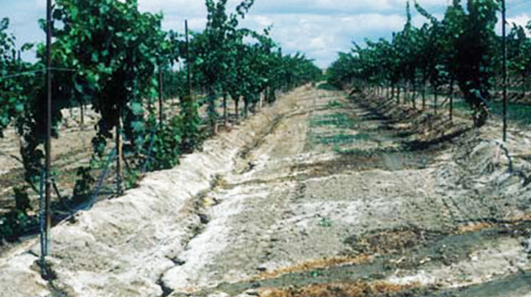Анализ почвы — важный элемент управления питанием растений. Часть вторая