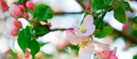 Бор и его значение в питании растений