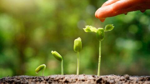 Физиологическая роль азота в питании растений