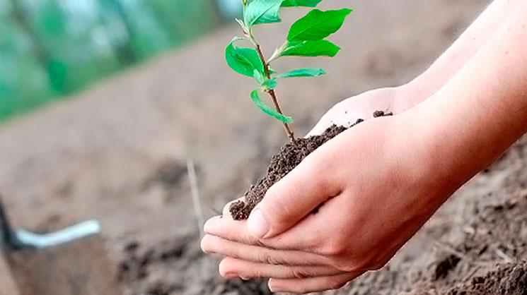 Выбор посадочного материала плодовых деревьев. Часть 1