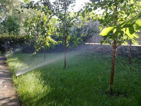 полив деревьев в промышленном саду