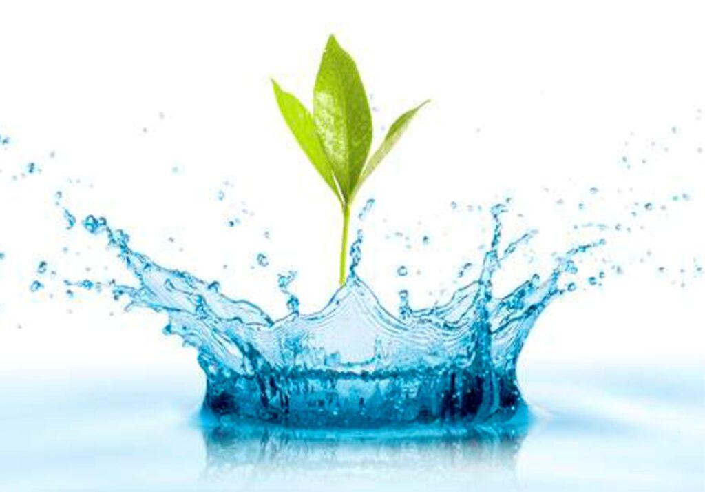 Качество и состав поливной воды