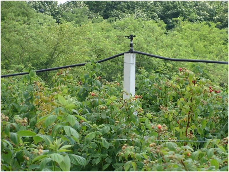 Использование систем дождевания для создания микроклимата